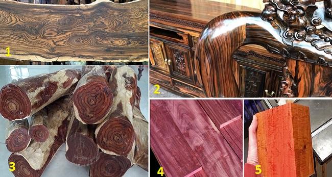 Top 10 các loại gỗ quý hiếm nhất trên thế giới